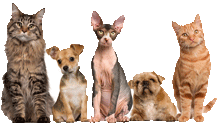 pet safe Pest Control newcastle