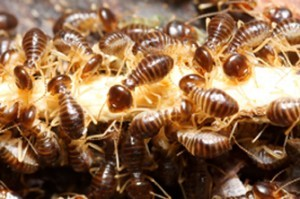 termite infestation newcastle
